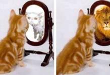 Недооцененная самооценка